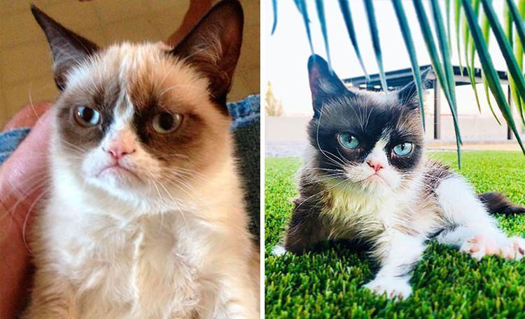 bohaterowie memów kiedyś i dziś - sfochany kot