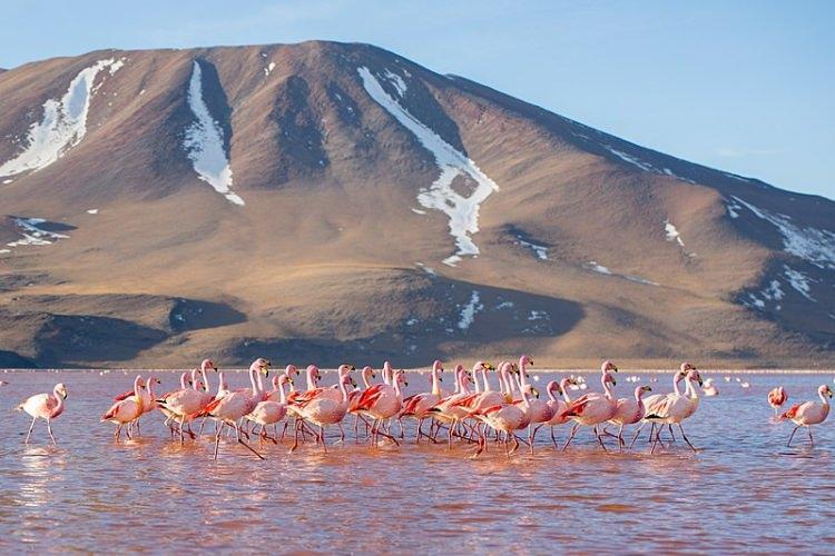 kolorowe jeziora na świecie - Laguna Colorada – bordowe jezioro w Boliwii