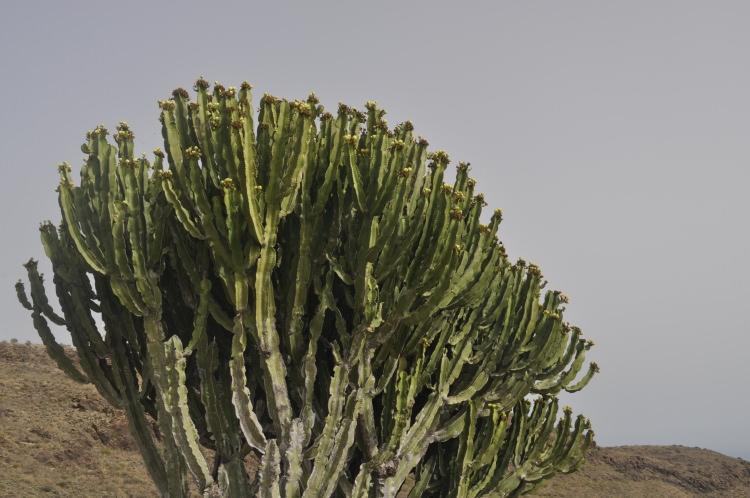 Punkt widokowy Mirador de la Degollada de las Yeguas Gran Canaria