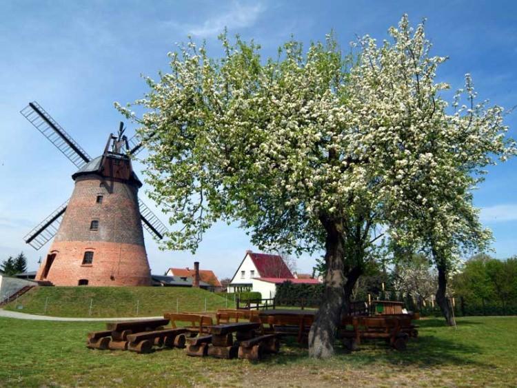 ostatni w Europie trójfunkcyjny młyn holendersk