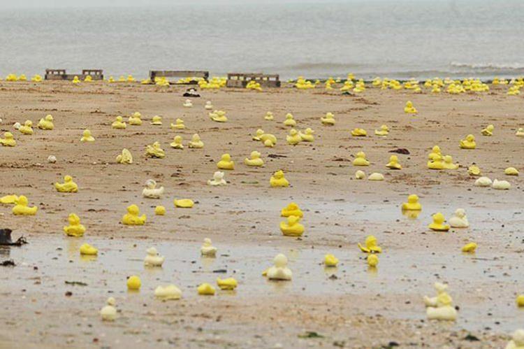 kaczki i inne zabawki wpadły do oceanu
