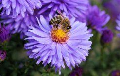 dlaczego pszczoły są ważne?