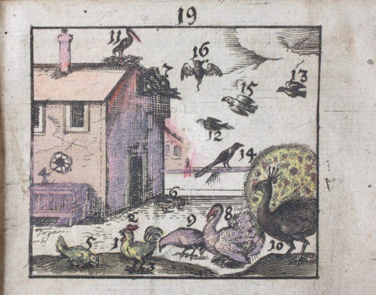 ilustracja z elementarza Jana Amosa Komenskiego pt. Orbis sensualium pictus (Świat malowany rzeczy widocznych pod zmysły podpadających)