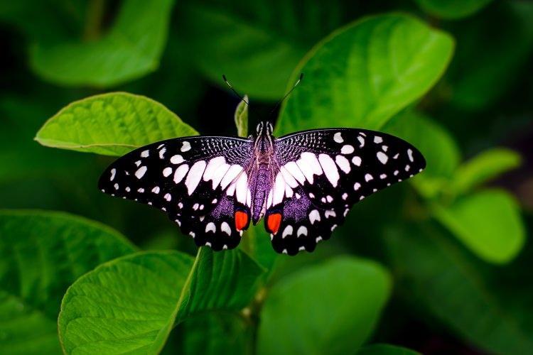 co jedzą motyle?