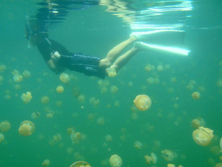 Jezioro pełne Meduz Palau