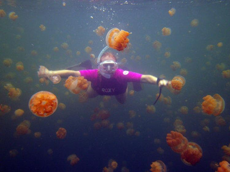 Jellyfish Lake na Palau