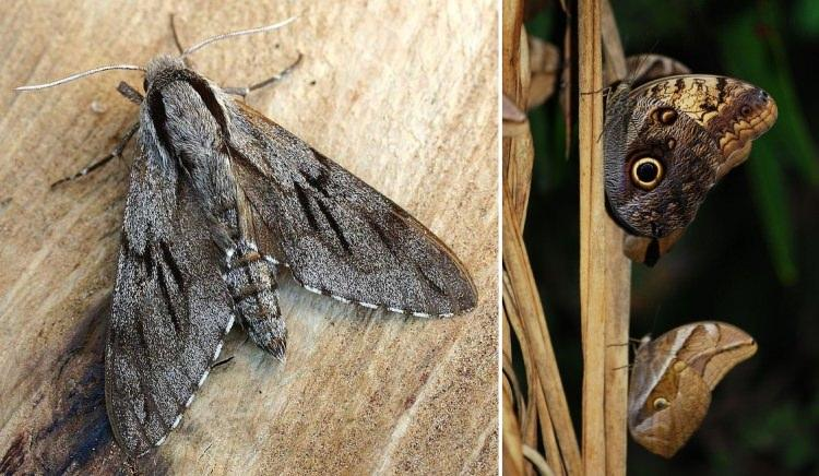 Kamuflaż motyli