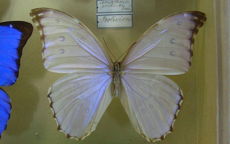Ciekawostki i fakty na temat motyli