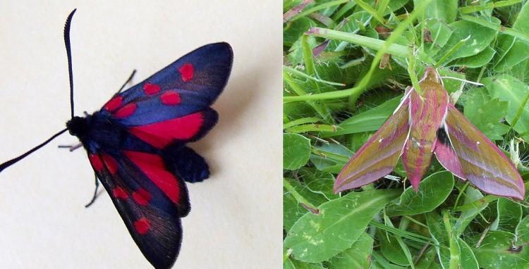 ciekawostki o motylach