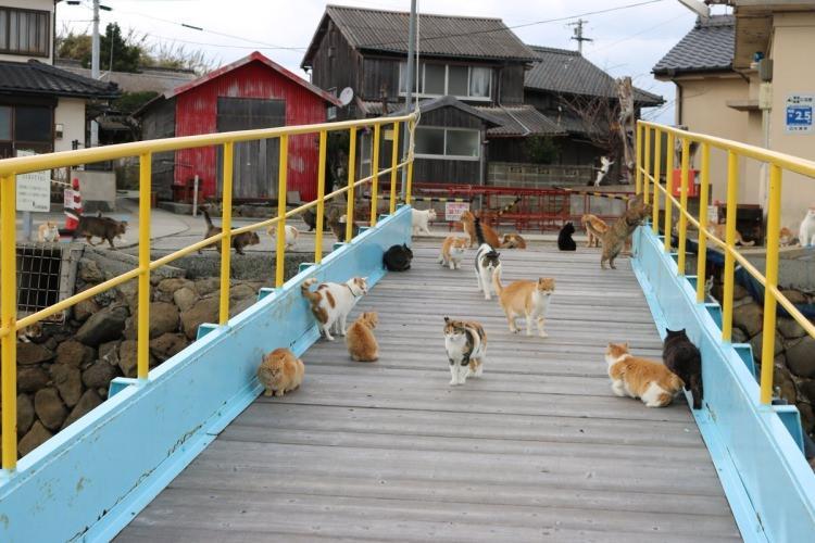 Koty na wyspie Aoshima