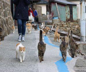 Aoshima – wyspa kotów w Japonii