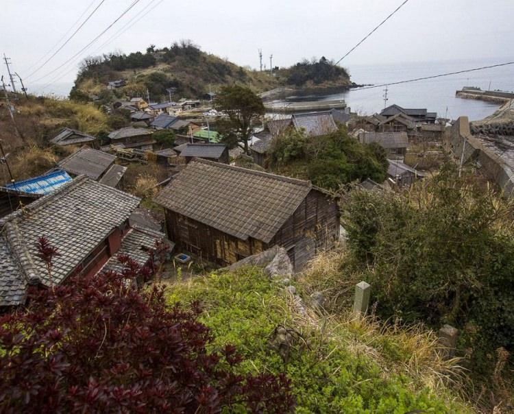 Aoshima - wyspa zamieszkana przez koty