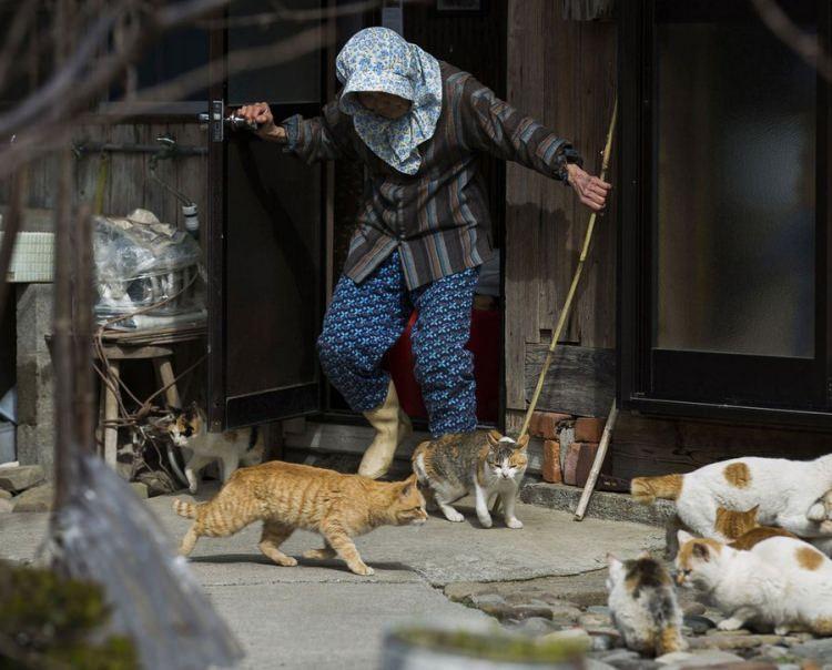 wyspa kotów w Japonii