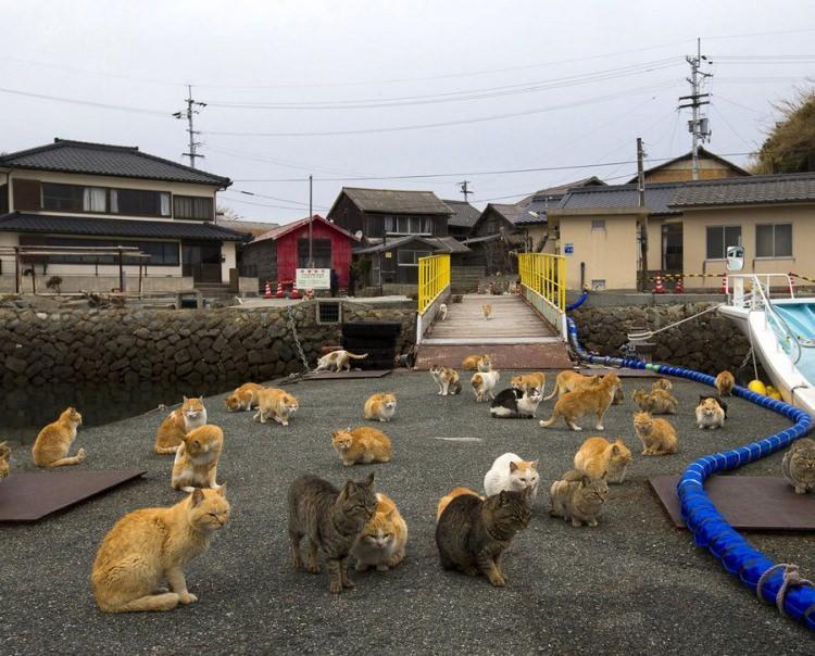 Aoshima, Japonia - wyspa kotów
