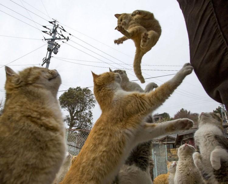 Aoshima wyspa kotów