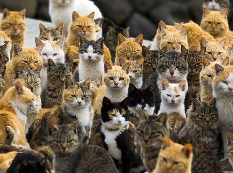Japonia - wyspa kotów