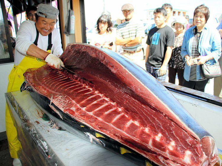 aomori tuńczyk
