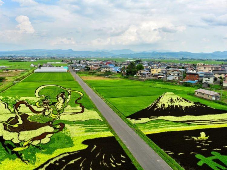 pola ryżowe w Aomori