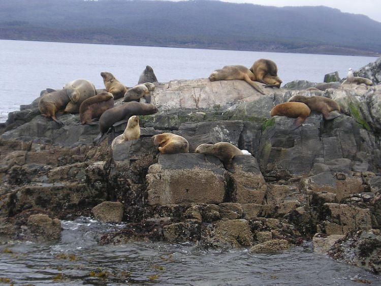 Lwy Morskie, Los Lobos, Ziemia Ognista