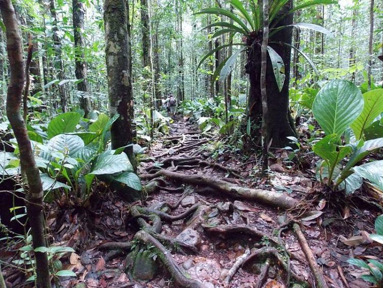 Dżungla w okolicy Salto Angel