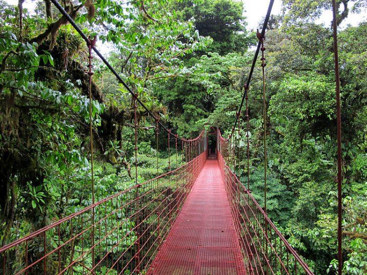Rezerwat Las Mglisty Monteverde