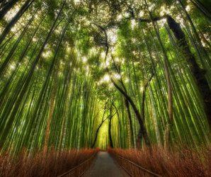Najpiękniejsze lasy na świecie