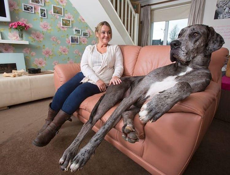 Freddy największy pies na świecie