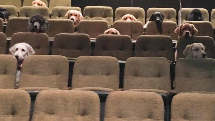 Psy w teatrze