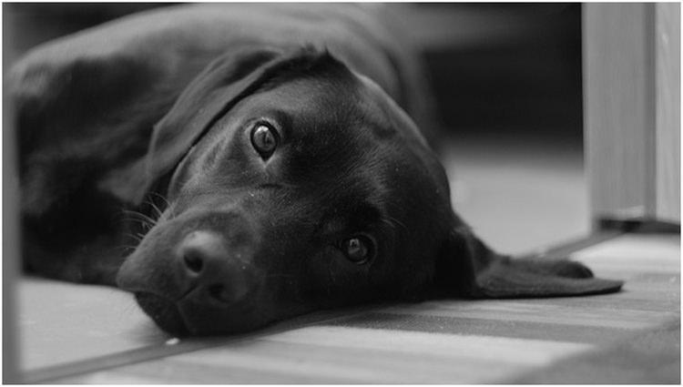 czarno białe zdjęcia psa