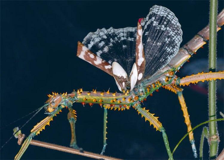 największe owady na świecie