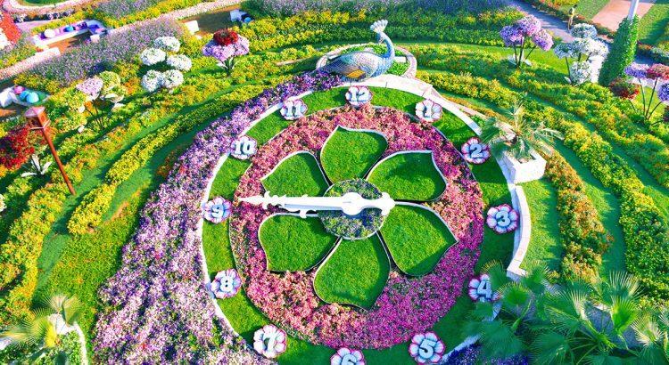 zegar z kwiatów w Dubai Miracle Garden