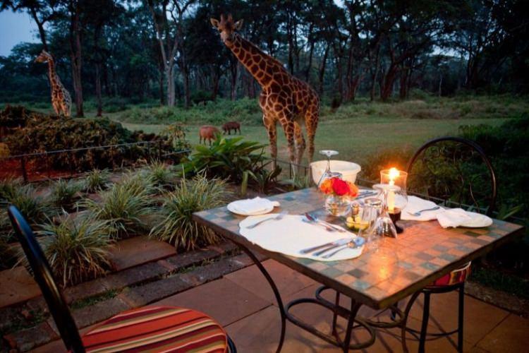 Kenia hotel z żyrafami