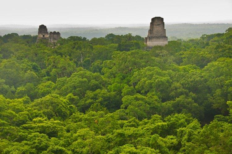 Tikal - ruiny miasta Majów w Gwatemali