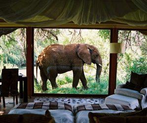 10 niezwykłych hoteli z dzikimi zwierzętami