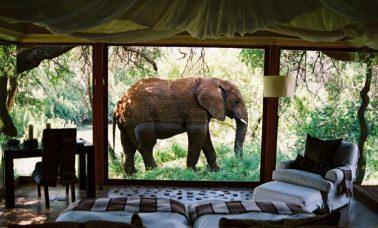hotele ze zwierzętami