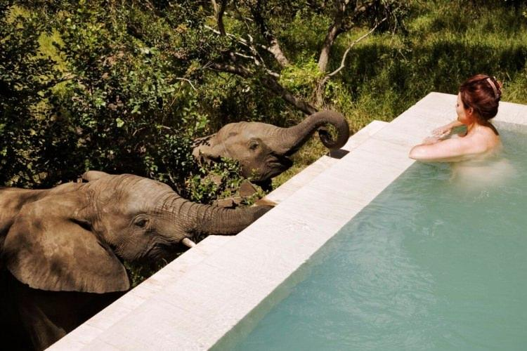 Royal Malewane Private Game Lodge