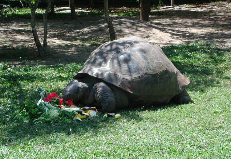 Żółw Harriet