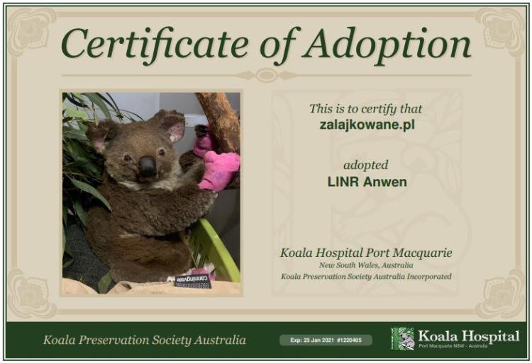 Wirtualna adopcja koali