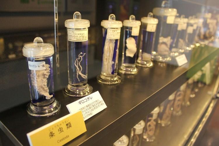 muzeum pasożytów w Tokio