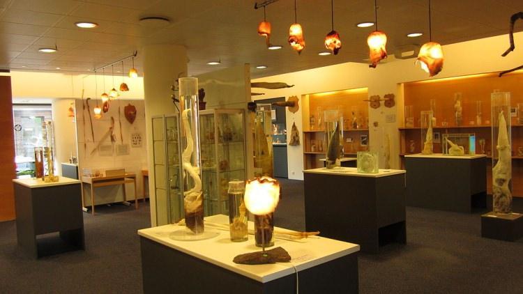 Muzeum penisów Islandia