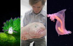 niesamowite zwierzęta głębinowe