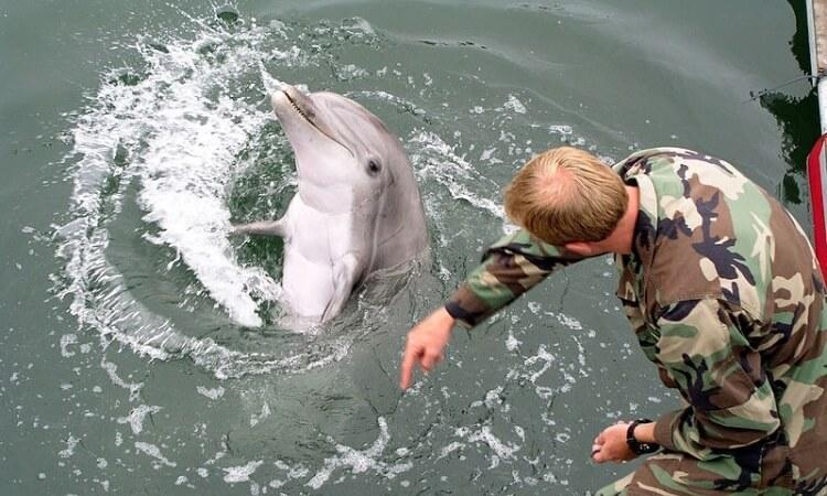 delfiny w US army
