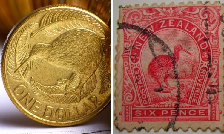 ptak Kiwi - symbol Nowej Zelandii