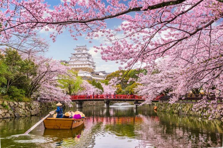 Zamek Himeji i kwitnące wiśnie