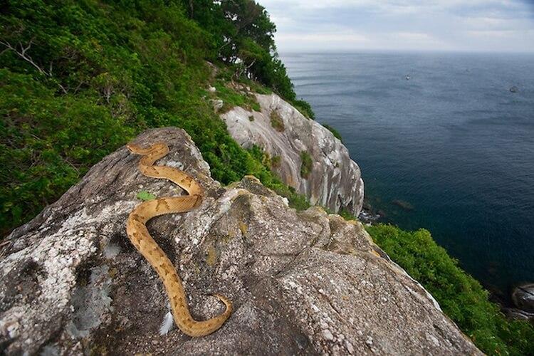 Ilha da Queimada Grande - wyspa węży Brazylia