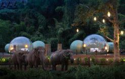 Wczasy pośród słoni w Tajlandii