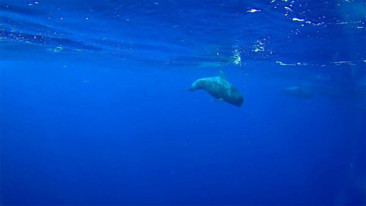 teneryfa wieloryby
