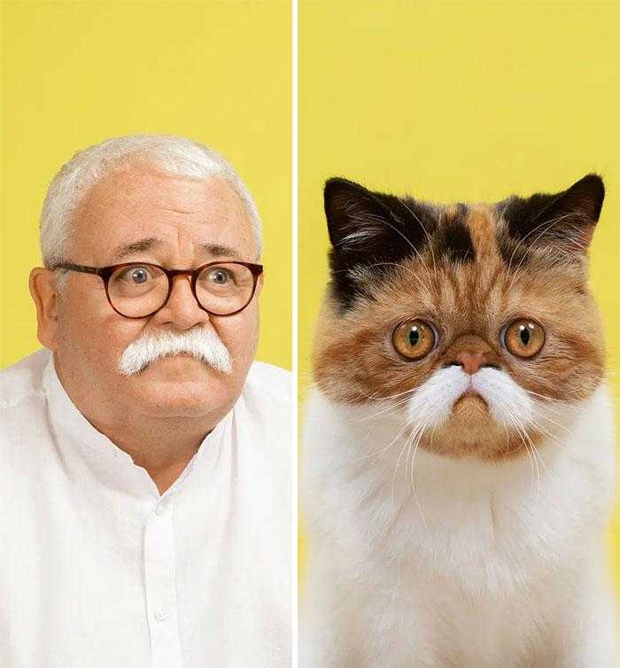 zabawne zdjęcia kotów
