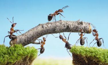 mrówki - ciekawostki ze świata zwierząt