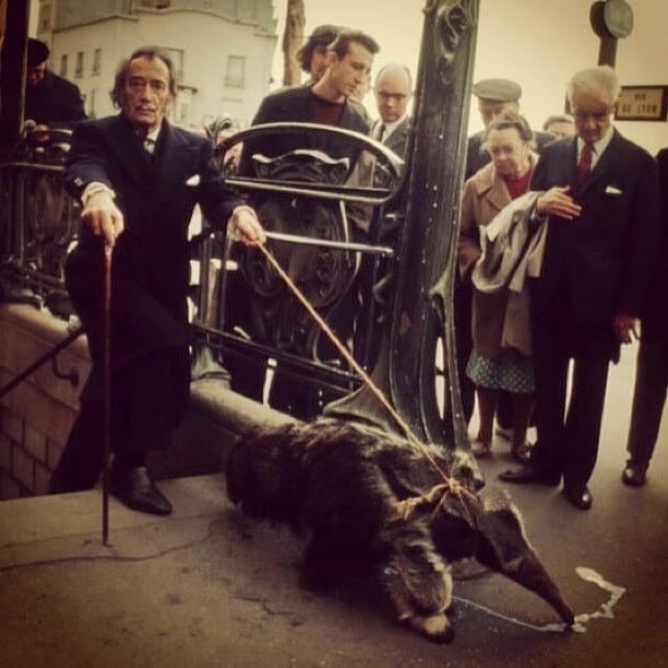Salvador Dali i mrówkojad